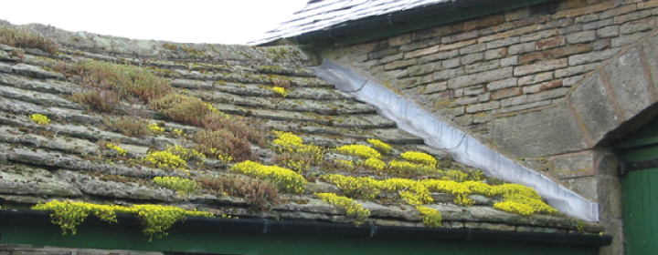 Roof Moss Removal in Aldershot, Farnham, Farnborough & Camberley
